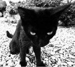 1-Cat.jpg